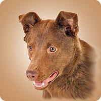 Adopt A Pet :: Red - Prescott, AZ