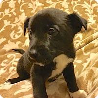 Adopt A Pet :: Fiona - Sparta, NJ