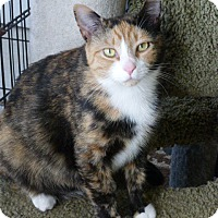 Adopt A Pet :: Myrtle - Conway, SC
