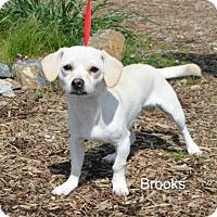 Adopt A Pet :: Brooks - Yreka, CA