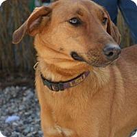 Adopt A Pet :: Reba - Danbury, CT