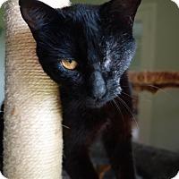 Adopt A Pet :: Elie - Waller, TX