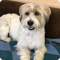 Adopt A Pet :: 'FAI' - Agoura Hills, CA