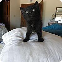 Adopt A Pet :: Babsy - Phoenix, AZ