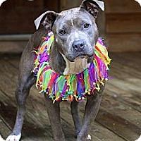 Adopt A Pet :: Kandi - Albany, NY
