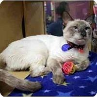 Adopt A Pet :: Dopsey - Orlando, FL
