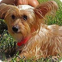 Adopt A Pet :: Sparkles - Brooksville, FL