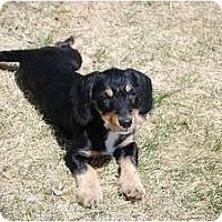 Adopt A Pet :: Murphy - Broomfield, CO