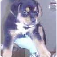 Adopt A Pet :: Tyson - Miami, FL