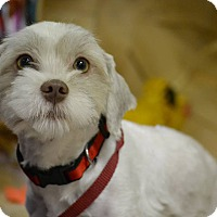 Adopt A Pet :: LEO - Higley, AZ