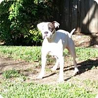 Adopt A Pet :: Allie - DFW, TX