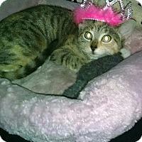 Adopt A Pet :: Elsa - Little Neck, NY