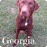 Adopt A Pet :: Georgia - Scottsdale, AZ