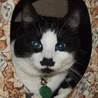Adopt A Pet :: Maynard G. Krebbs - Burbank, CA