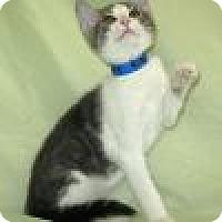 Adopt A Pet :: Rhinehart - Powell, OH