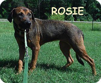 Labrador Retriever Dog for adoption in Batesville, Arkansas - Rosie