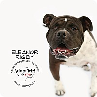 Adopt A Pet :: Eleanor Rigby - Los Angeles, CA
