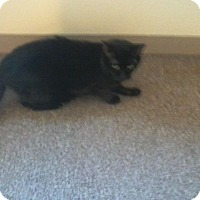 Adopt A Pet :: Pouhatan - Acushnet, MA