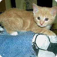 Adopt A Pet :: Jon - San Jose, CA