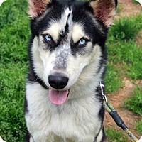 Adopt A Pet :: Link - Youngsville, NC