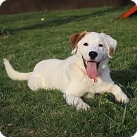 Adopt A Pet :: Katie - Sparta, NJ