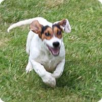 Adopt A Pet :: Mercury - Harmony, Glocester, RI