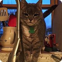 Adopt A Pet :: THELMA - Mahopac, NY