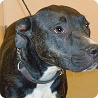 Adopt A Pet :: Forest - Wildomar, CA