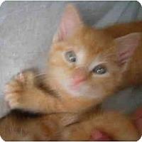 Adopt A Pet :: Little Max - Riverside, RI