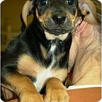 Adopt A Pet :: Trevor - Staunton, VA