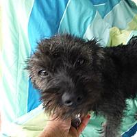 Adopt A Pet :: TOOTSIE - Atascadero, CA
