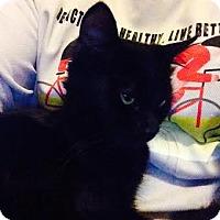 Adopt A Pet :: Spice - Modesto, CA