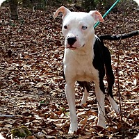 Adopt A Pet :: Ryder - Westminster, MD