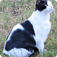 Adopt A Pet :: Lorelii - Gonzales, TX