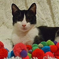 Adopt A Pet :: Lemon - Morgantown, WV