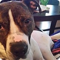 Adopt A Pet :: Nena - Homer, NY