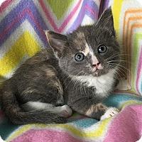 Adopt A Pet :: Tink - Tampa, FL