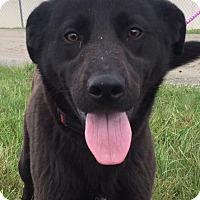 Adopt A Pet :: Jake - Hillsboro, OH