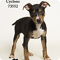 Adopt A Pet :: Cyclone - Baton Rouge, LA