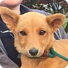 Adopt A Pet :: HAZEL AND HONEY