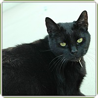 Adopt A Pet :: Subway - Glendale, AZ