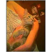 Adopt A Pet :: Sterling - Owasso, OK
