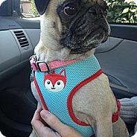 Adopt A Pet :: Hazel - West Hills, CA