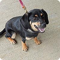 Adopt A Pet :: Honey - Chilhowie, VA
