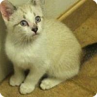 Adopt A Pet :: Owen - Riverside, RI