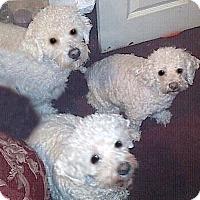 Adopt A Pet :: Cody - East Hanover, NJ