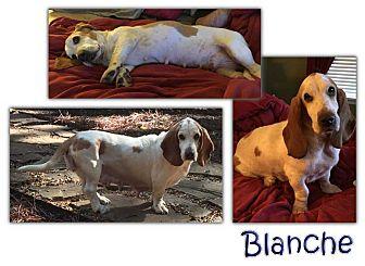 Basset Hound Dog for adoption in Marietta, Georgia - Blanche