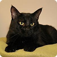 Adopt A Pet :: Rumplestiltskin - Milford, MA