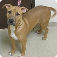 Adopt A Pet :: Leo - Gary, IN