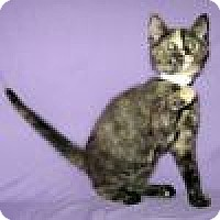 Adopt A Pet :: Nakia - Powell, OH